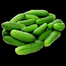 Fresh Cucumbers 6kg