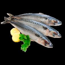 Negro - Frozen Mackerel, kg ( 150-300 g/pieces) / Macrou kg   (~1.3kg)